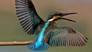 סדרת הרצאות ממעוף הציפור - בעריכת פרופ' יוסי לשם