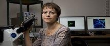קולטן במוח - מפתח אפשרי להארכת החיים ולפיתוח תרופה לאלצהיימר