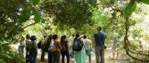 """סיור ט""""ו בשבט בגן הבוטני: עצי ארץ ישראל בתרבות, בהיסטוריה ובחיי היום-יום"""