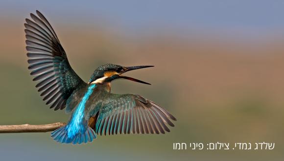 ממעוף הציפור